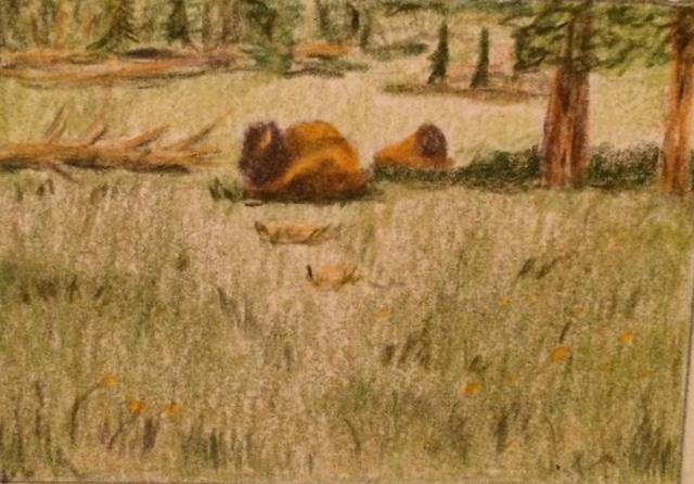bison, buffalo, colored pencil art